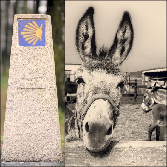 Do it your way: ¡A Santiago en burro!